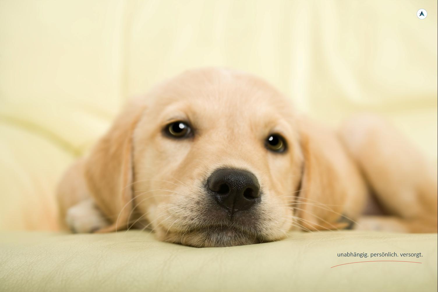 AGENTIN-Hundehaftpflichtversicherung-Versicherungsmakler-Berlin-Andre-Böttcher
