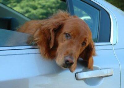 Hundehaftpflichtversicherung: Versicherungspflicht für Hundehalter ab dem 01.07.2011 in Niedersachsen