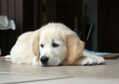 Kein Regressanspruch einer Gebäudeversicherung an Hundehaftpflichtversicherung