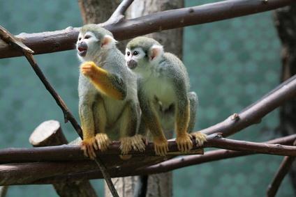 Krankenversicherung hat keinen Schadensersatzanspruch gegen Zoobetreiber