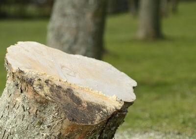 Private Haftpflichtversicherung – Schäden durch Baumfällung mitversichert
