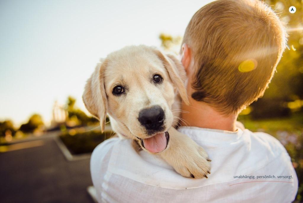 AGENTIN-Hundehaftpflichtversicherung-Hund-Haftpflicht-Versicherung-Berlin-Tierhalter-Versicherungsmakler-Berlin-Andre-Böttcher-Agentin