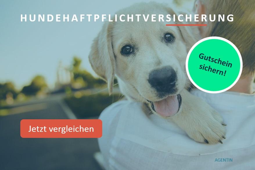 Hundehaftpflicht-Berlin-Hundehaftpflichtversicherung-Berlin-vergleichen-abschliessen-Versicherungsmakler-Berlin-Andre-Boettcher