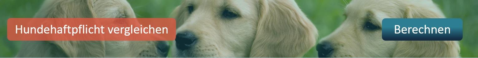 Hundehaftpflicht-Hundehaftpflichtversicherung-vergleichen-abschliessen